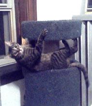 Kiwi Hangs Out