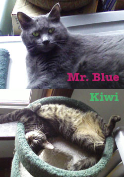 Mr. Blue and Kiwi