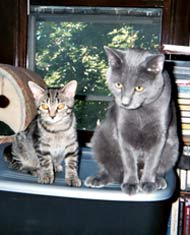 Kiwi & Mr. Blue in 2005