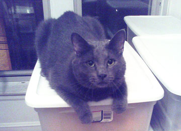 Mr. Blue on a box