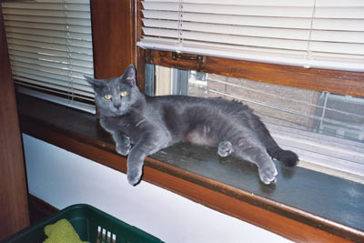 Mr. Blue on a windowsill